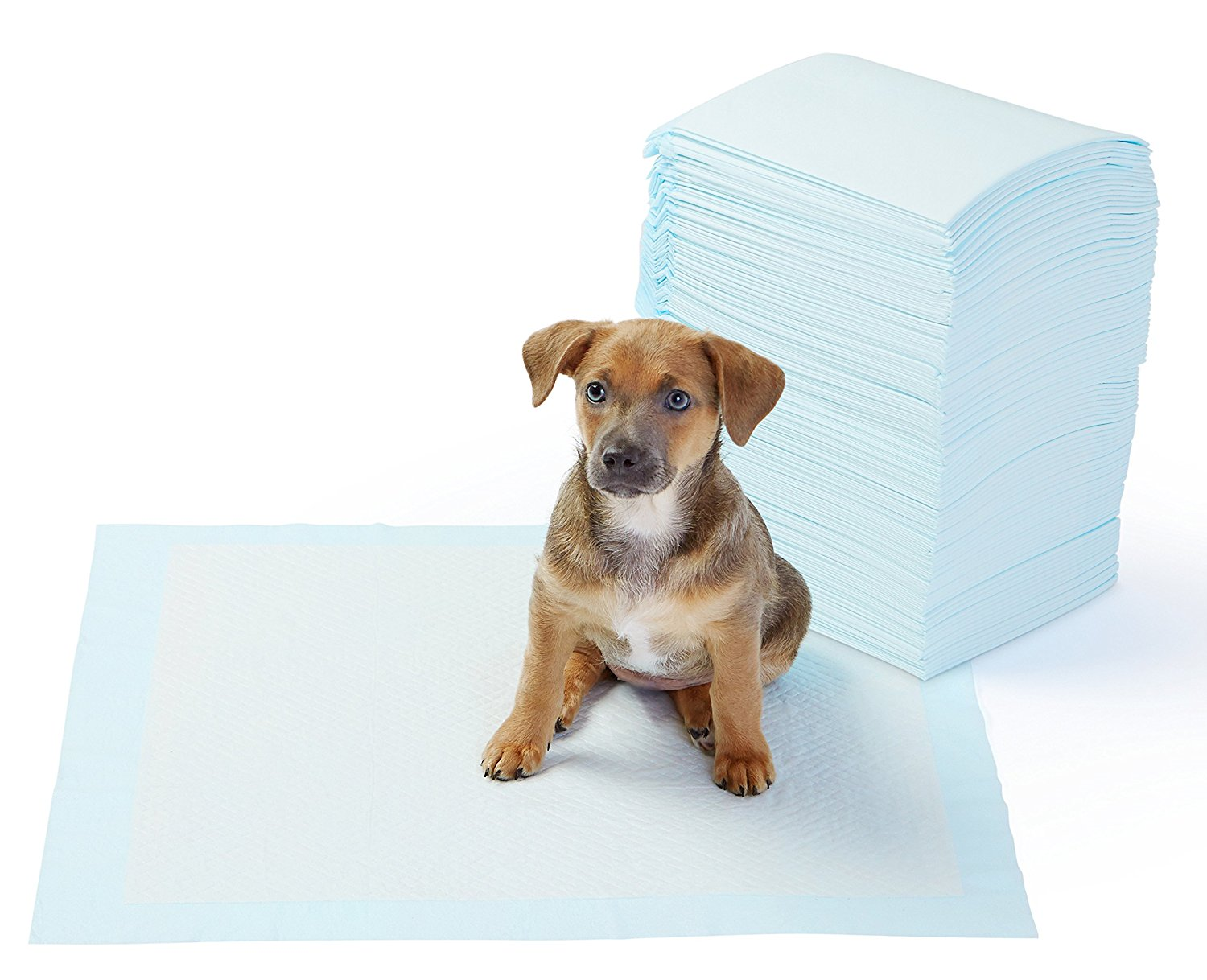 Image result for AmazonBasics Pet Training Pads, Standard